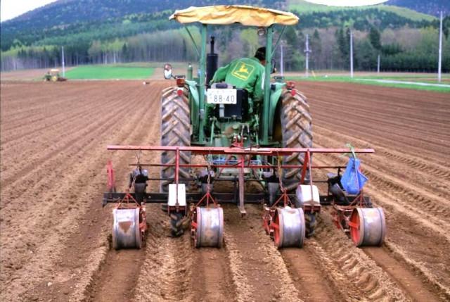 白花豆の種植え後の土かけ作業(北海道農政部農政課・網走支庁北見地区農業改良普及センター)
